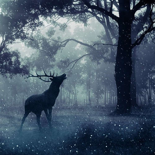 Nejčernější les