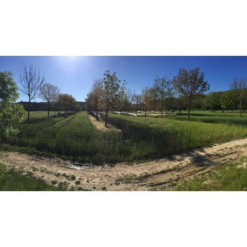 Agrolesnictví: na poli jako v lese