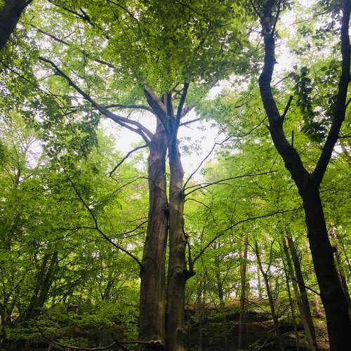 Tou-Jou:Meditace se stromem