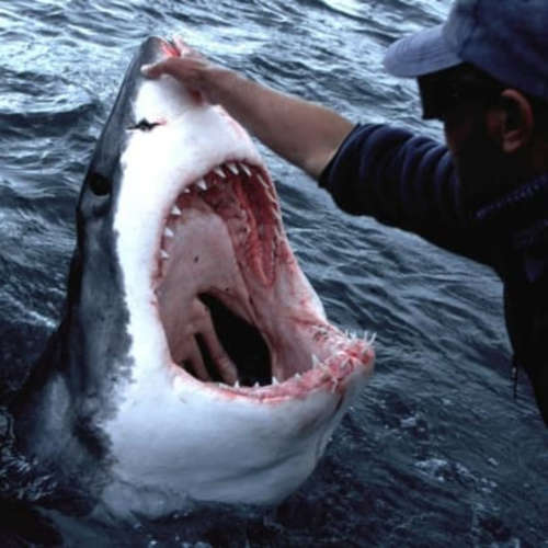 Hausbot Petra Horkého 2019 (12) - Andre Hartmann - žraločí muž