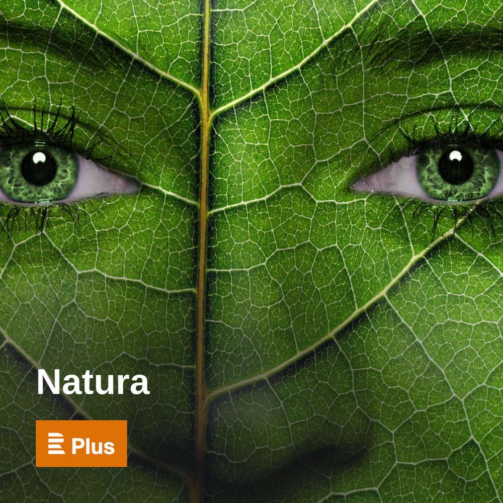Natura - Vítěz letošního Ekofilmu režisér Jan Svatoš
