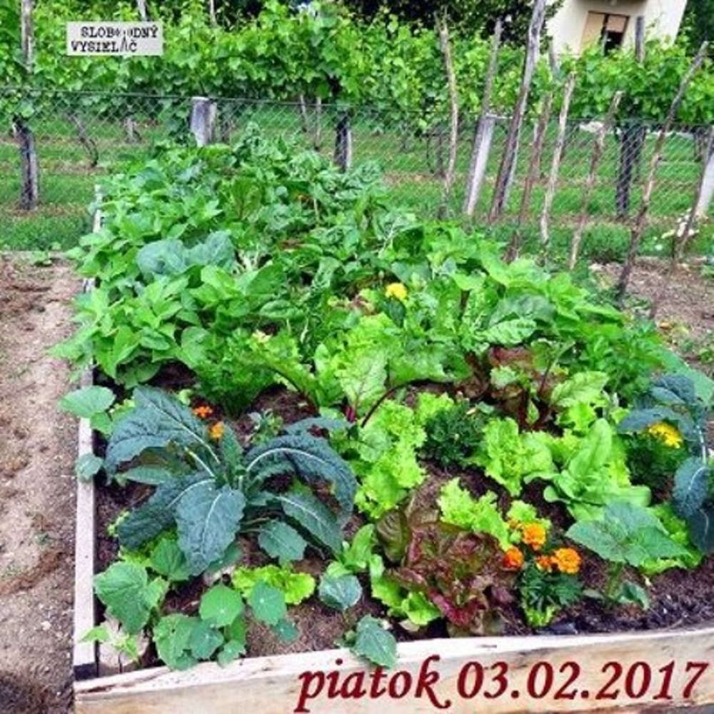 Rie enia a alternativy 05 2017 02 03 Prirodne jedle zahrady