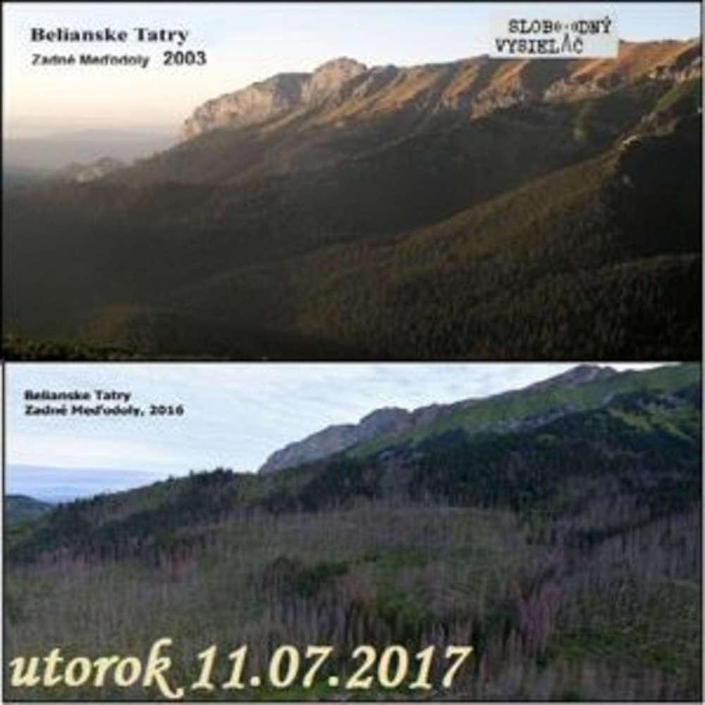 V prvej linii 2017 07 11 Slovenske lesy v smrte nom ohrozeni