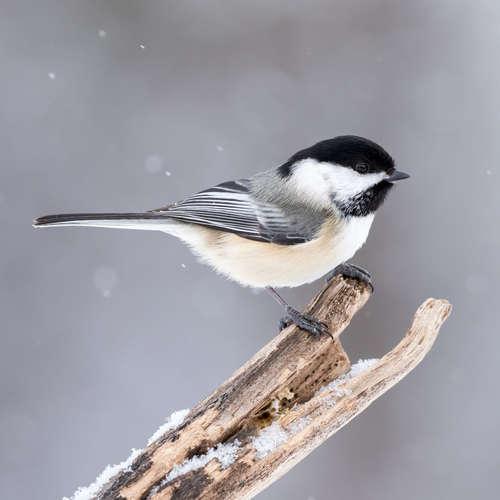 Vtáky lietajú a spievajú pri horskom potoku