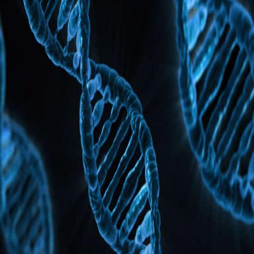 O nových zisteniach v prípade narodenia geneticky upravených detí v Číne