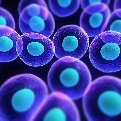 Syntetické bunky: najambicióznejší projekt v histórii