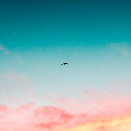115. Roger Scruton: filozof, ktorý žil krásu