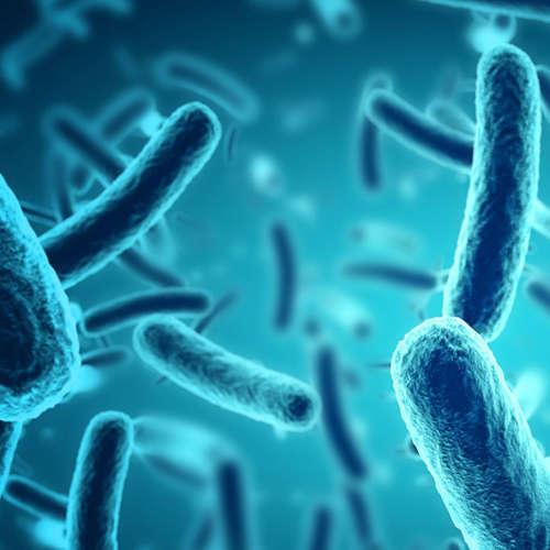 186. Ako urobiť geneticky upravené baktérie bezpečnými?