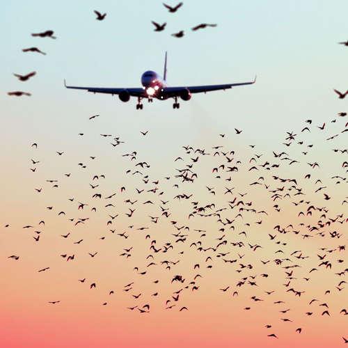 Biologická ochrana letiska: Stano Sabo pracuje aj s dravcami