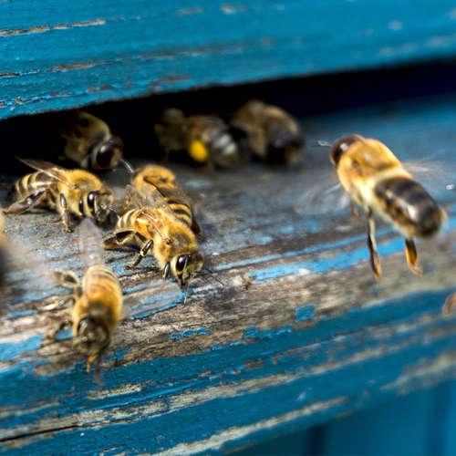 Povolanie: včelárka (Rita Novosadová)