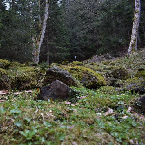 Strať sa v hrôzostrašnom lese Flochová (Výlety po Slovensku s One2We)