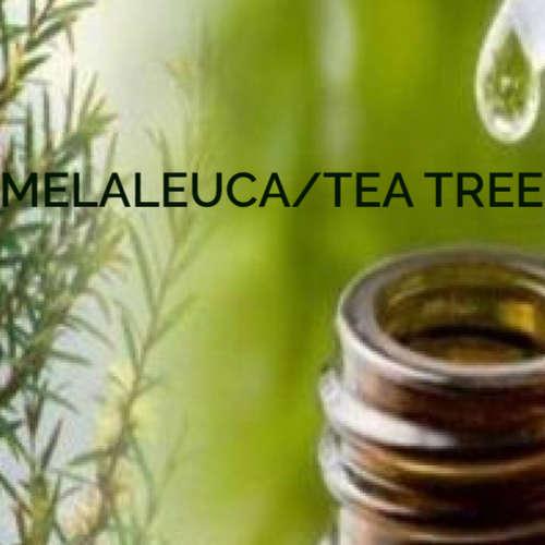 Melaleuca / Tea tree Esenciální olej